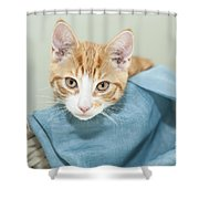 Ginger Kitten In A Basket Shower Curtain