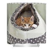 Ginger Kitten In An Igloo Shower Curtain