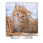 Ginger Kitten In Basket Shower Curtain