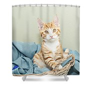 Ginger Kitten Standing In A Basket Shower Curtain