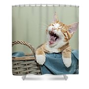 Ginger Kitten Yawning Shower Curtain