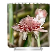 Ginger Plant Flower Shower Curtain