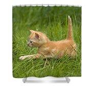 Ginger Tabby Kitten Shower Curtain