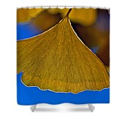 Gingko Leaf Losing Chlorophyll Shower Curtain