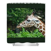 Giraffe-09028 Shower Curtain