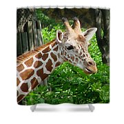 Giraffe-09034 Shower Curtain