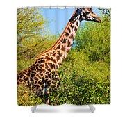 Giraffe Among Trees. Safari In Serengeti. Tanzania Shower Curtain