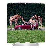 Giraffe. Animal Studies Shower Curtain