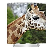 Giraffe Beauty Shower Curtain