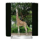 Giraffe Eats-09053 Shower Curtain
