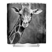 Giraffe Face In Black And White Shower Curtain