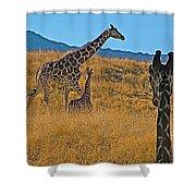 Giraffe Family In Living Desert Museum In Palm Desert-california Shower Curtain