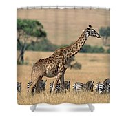 Giraffe Giraffa Camelopardalis Shower Curtain