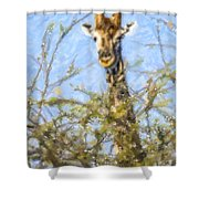 Giraffe Giraffa Camelopardalis Peeping From Acacia Shower Curtain