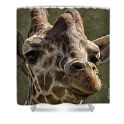 Giraffe Hey Are You Looking At Me Shower Curtain