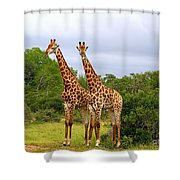 Giraffe Males Before The Storm Shower Curtain