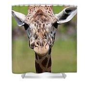 Giraffe Peek A Boo Poster Shower Curtain