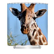 Giraffe Portrait Close-up. Safari In Serengeti. Shower Curtain