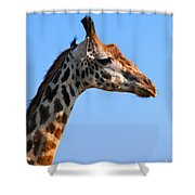 Giraffe Portrait Close-up. Safari In Serengeti. Tanzania Shower Curtain