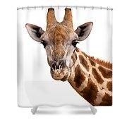 Giraffe Portrait Shower Curtain