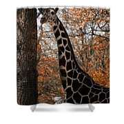 Giraffe Posing Shower Curtain