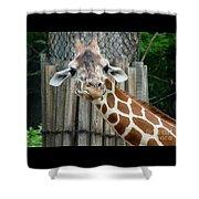 Giraffe-really-09025 Shower Curtain