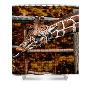Giraffe Showing His 20 Inch Tongue Shower Curtain