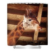 Giraffe Smarty Shower Curtain