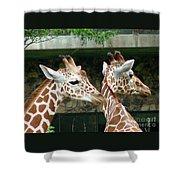 Giraffes-09023 Shower Curtain