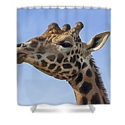Giraffes 3 Shower Curtain