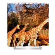 Giraffes At The Zoo Shower Curtain