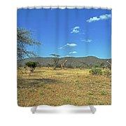 Giraffes In Samburu National Reserve Shower Curtain