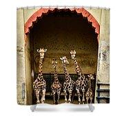 Giraffes Lineup Shower Curtain