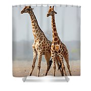 Giraffes Standing Together Shower Curtain by Johan Swanepoel