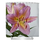 Girosa Lily Shower Curtain by Sandy Keeton