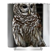 Give A Hoot Shower Curtain by John Haldane