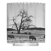 Give Me A Home Where The Buffalo Roam Bw Shower Curtain