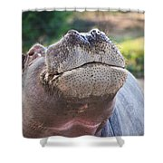 Give Me A Kiss Hippo Shower Curtain