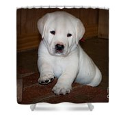 Give Me Your Paw Shower Curtain