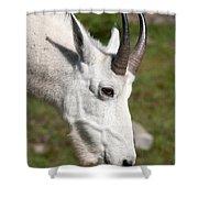 Glacier Goat Shower Curtain