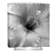 Gladiola Flowers Monochrome Shower Curtain