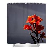 Gladioli Shower Curtain