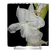 Gladiolus Past Time Shower Curtain
