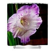 Gladiolus - Summer Beauty Shower Curtain