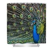 Glamour Shower Curtain by Andrew Paranavitana