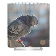 Glance From Above Shower Curtain