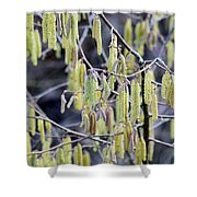 Glance In The Woods Shower Curtain