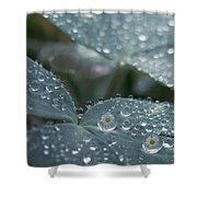 Glass Daisies Shower Curtain