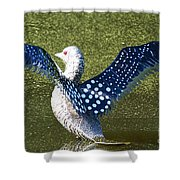 Glass Loon Shower Curtain