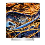 Glass Whale On Fishing Nets Shower Curtain